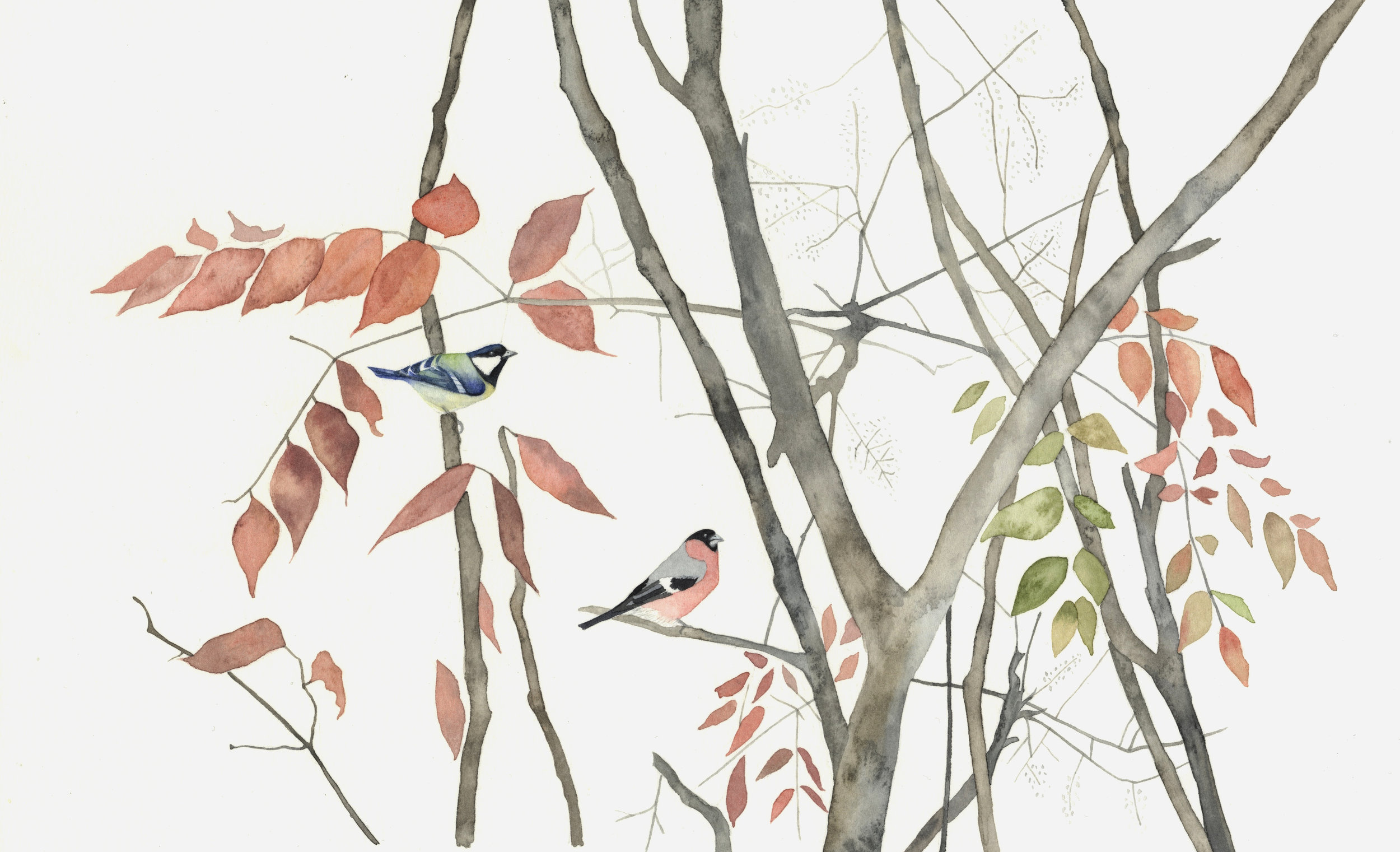 Bullfinch and Great Tit  watercolour  40 x 30 cm framed  £320