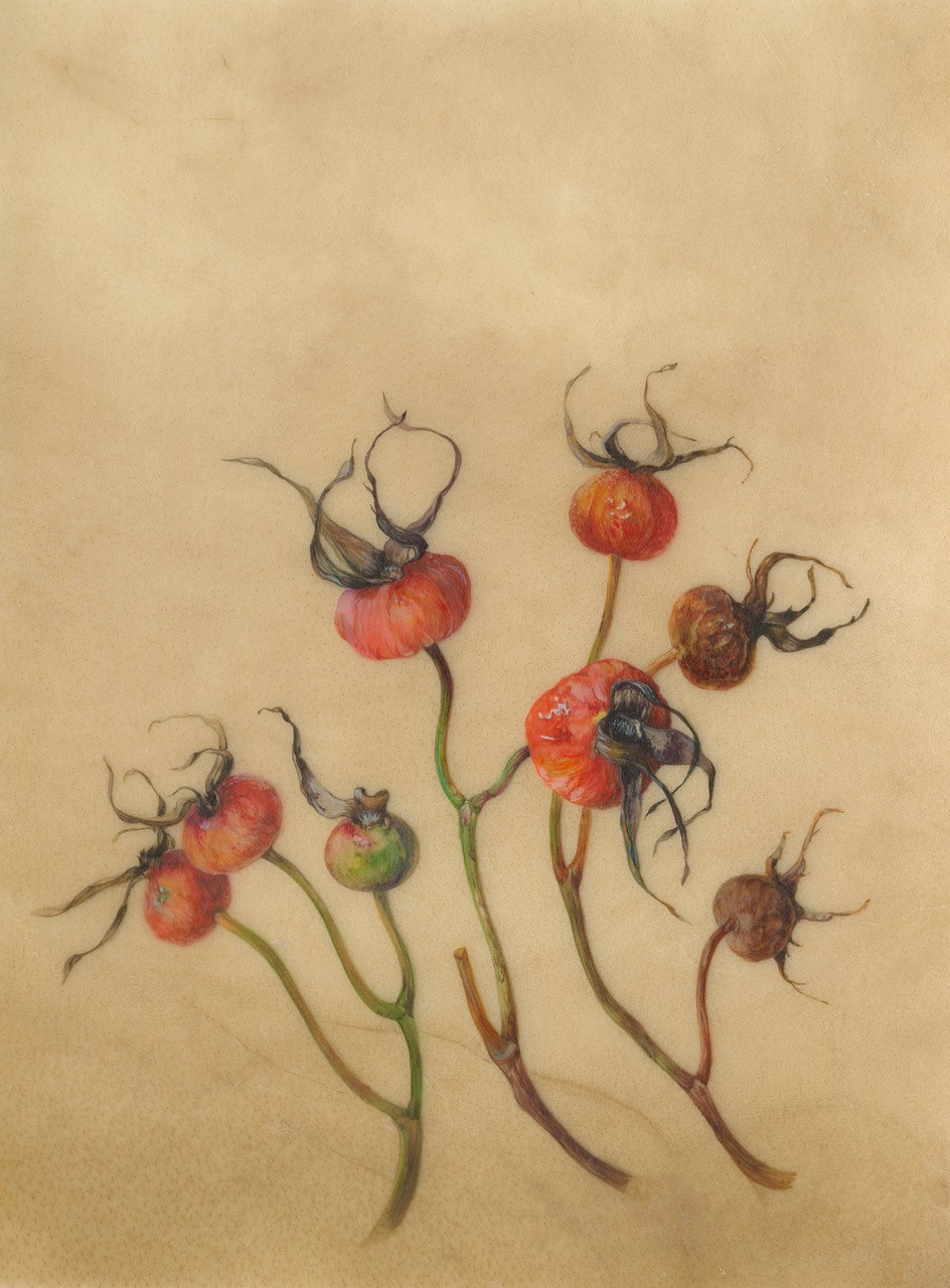 Norfolk hips  watercolour on natural calfskin  Image size: 12.5x16.5cm  SOLD