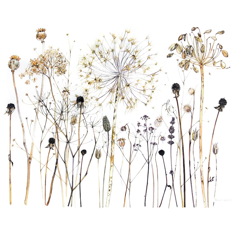 Allium  watercolour  69 x 61 cm (framed)  SOLD