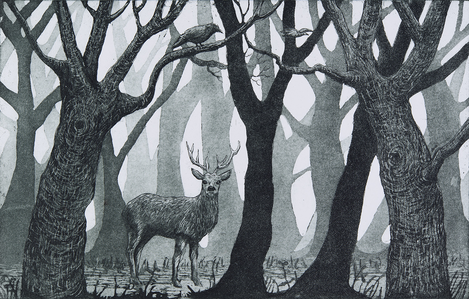 Forest Glen  Etching and aquatint  24 x 34cm  £150 unframed