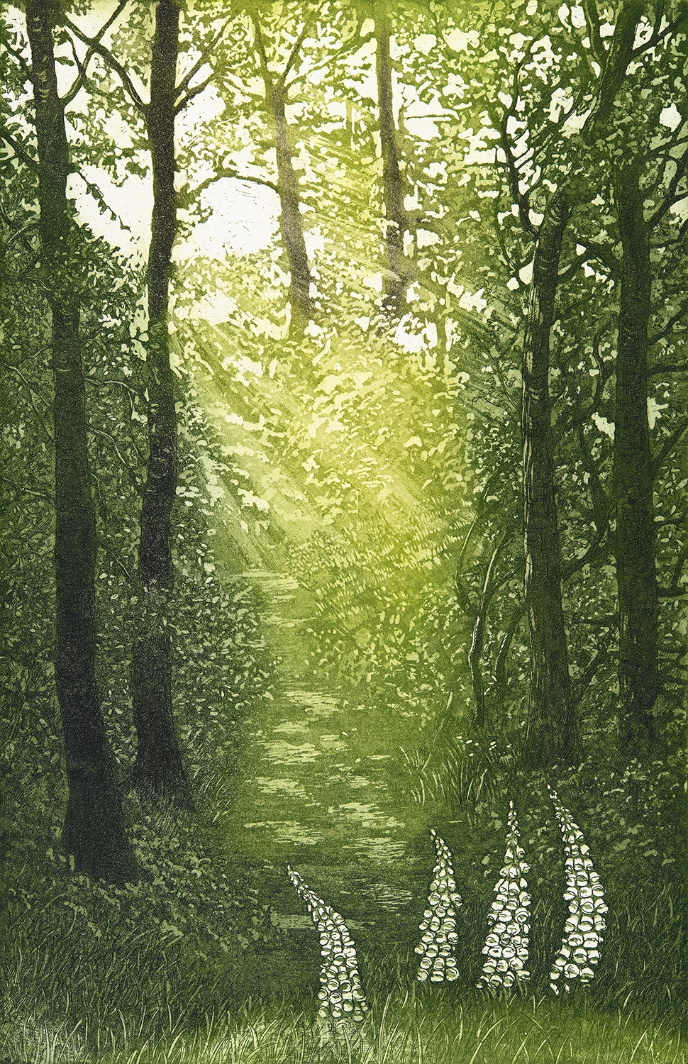Woodland Glade  Etching and aquatint  35 x 22cm  £195 framed