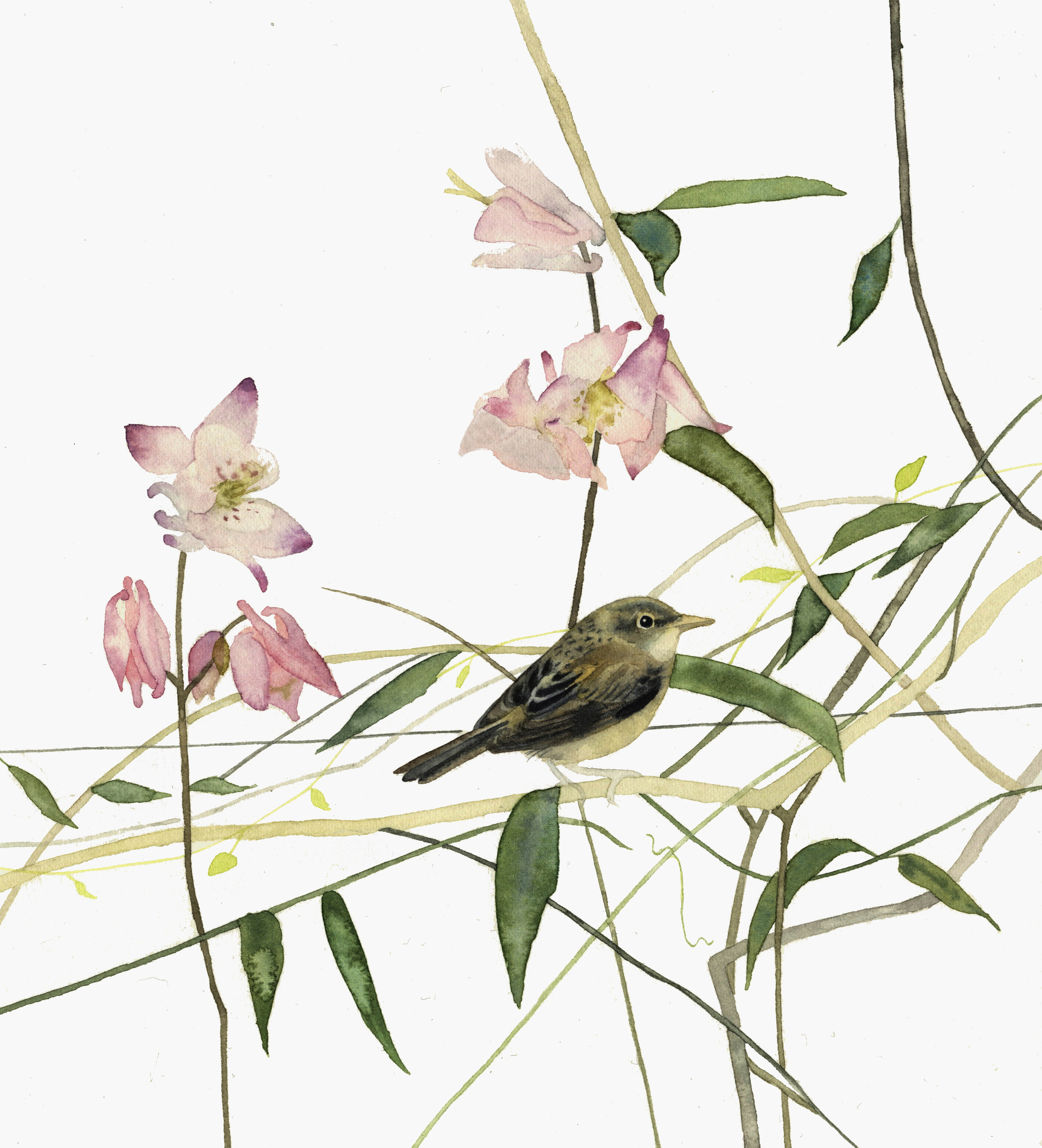 Bird Pink Flowers  watercolour  40 x 40 cm framed  £310