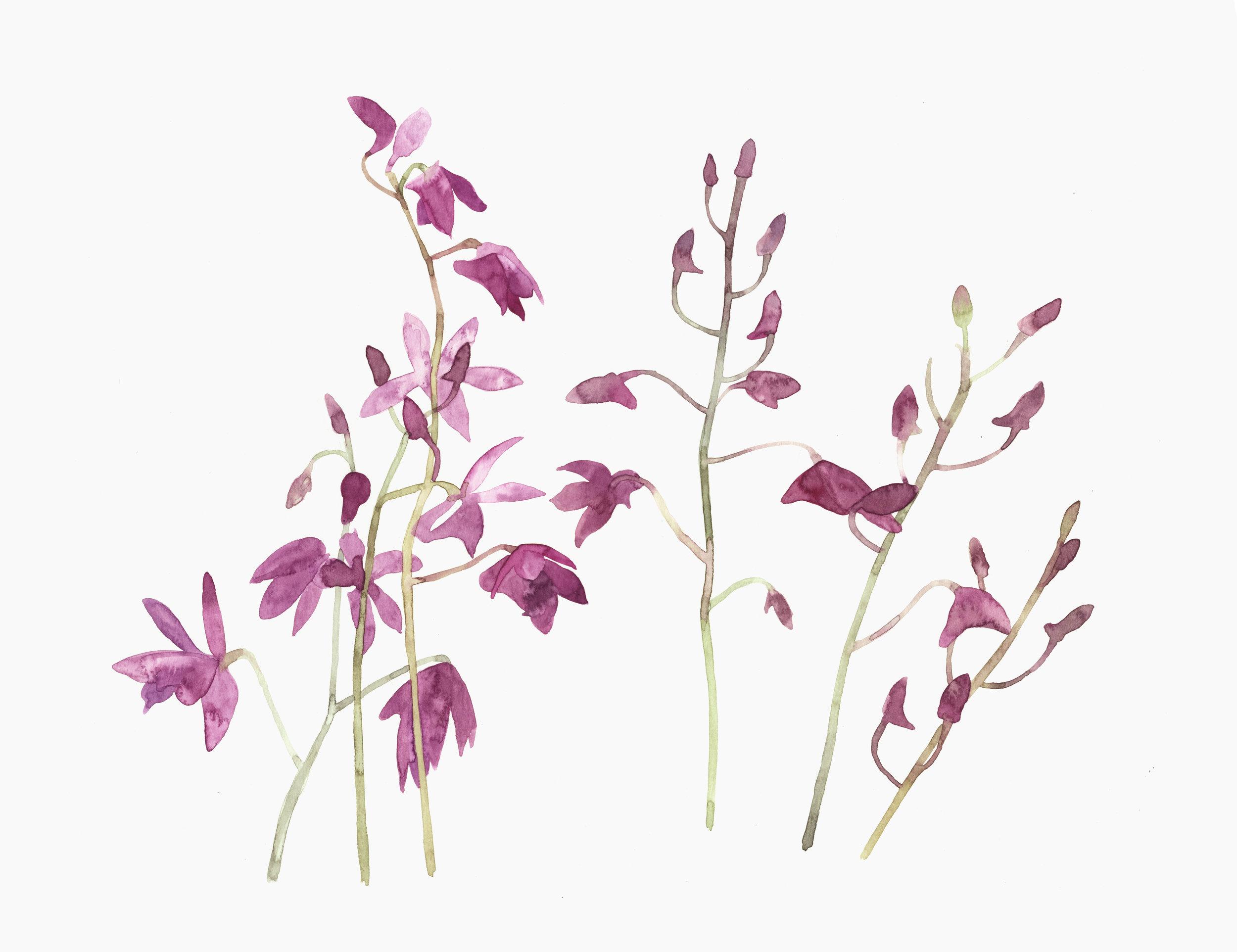 Fuchsia Flower  watercolour  50 x 40 cm framed  £320