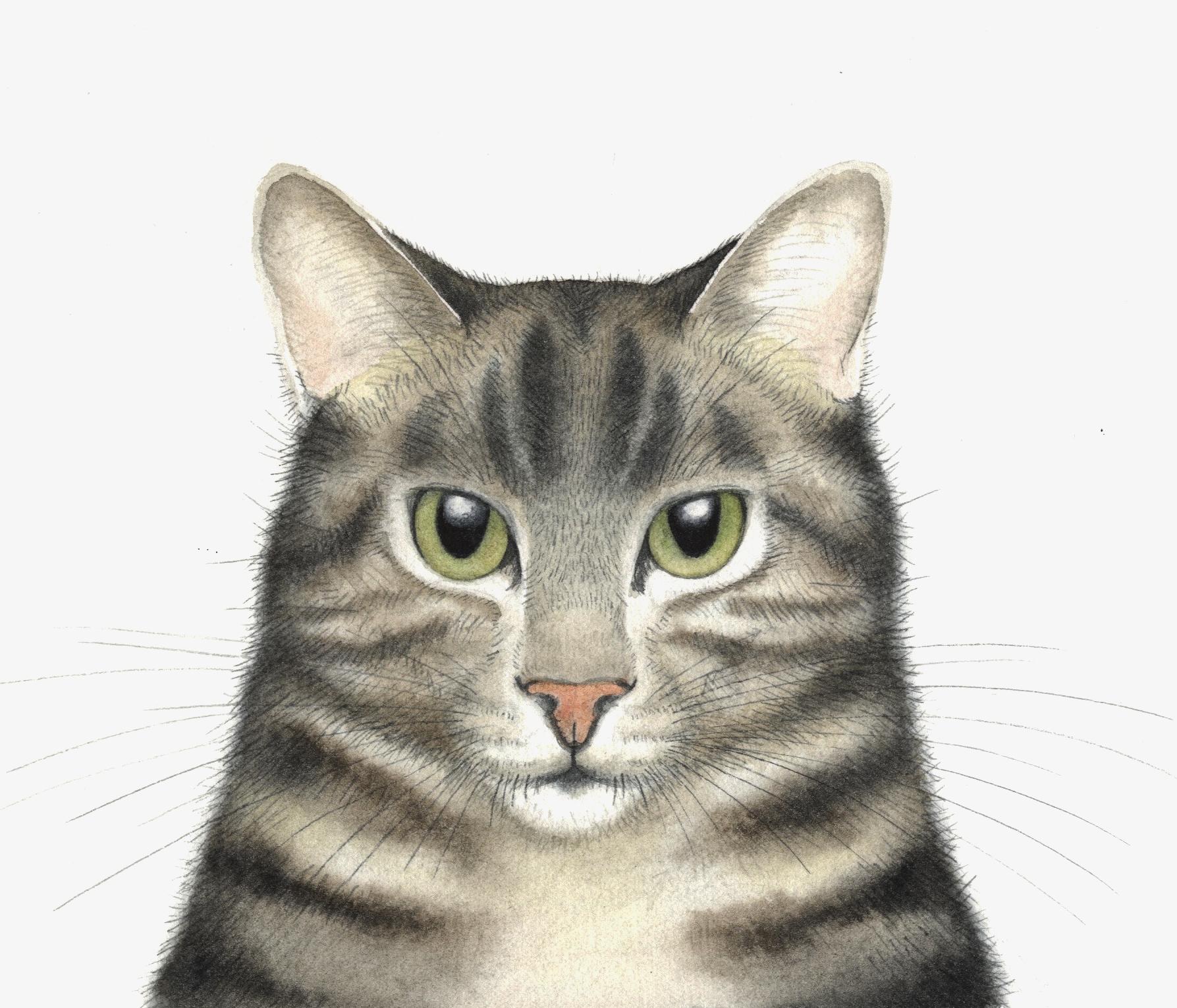 Tom Cat  watercolour  40 x 40 framed  £280
