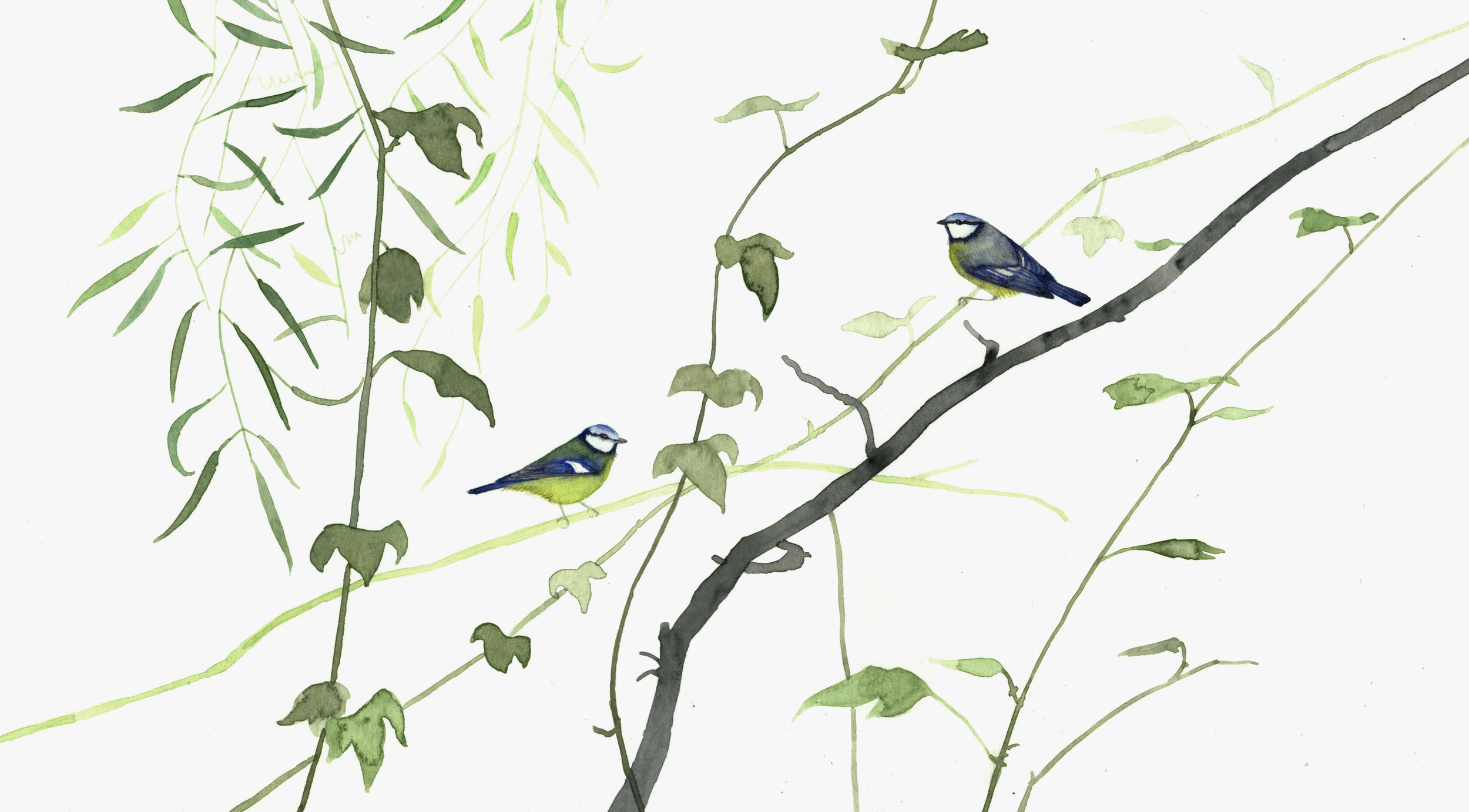 Two Blue Tits  watercolour  40 x 30 cm framed  £290