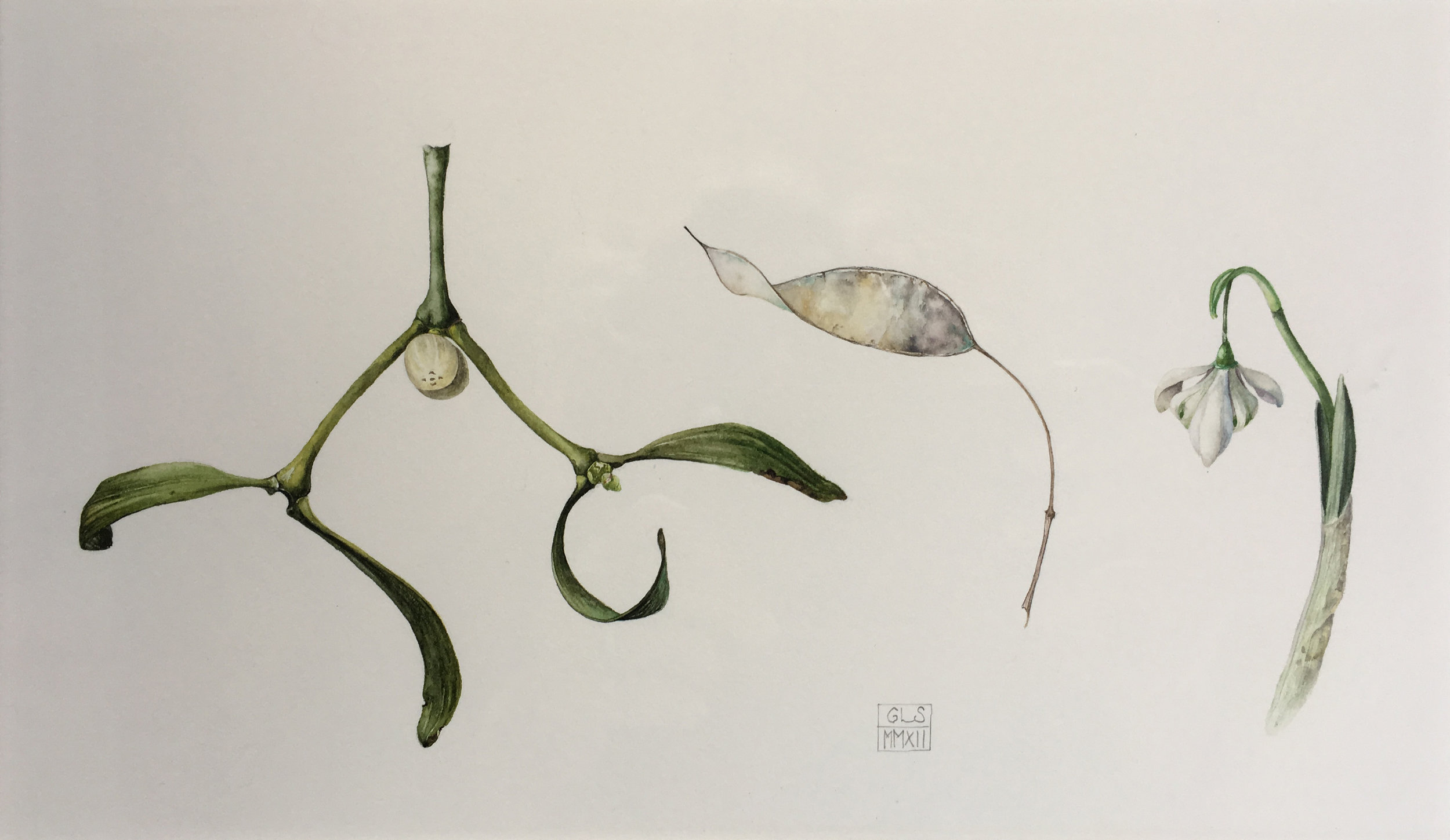 Mistletoe Honesty and Snowdrop  watercolour on paper  25 x 15 cm image  48 x 38 cm framed  SOLD