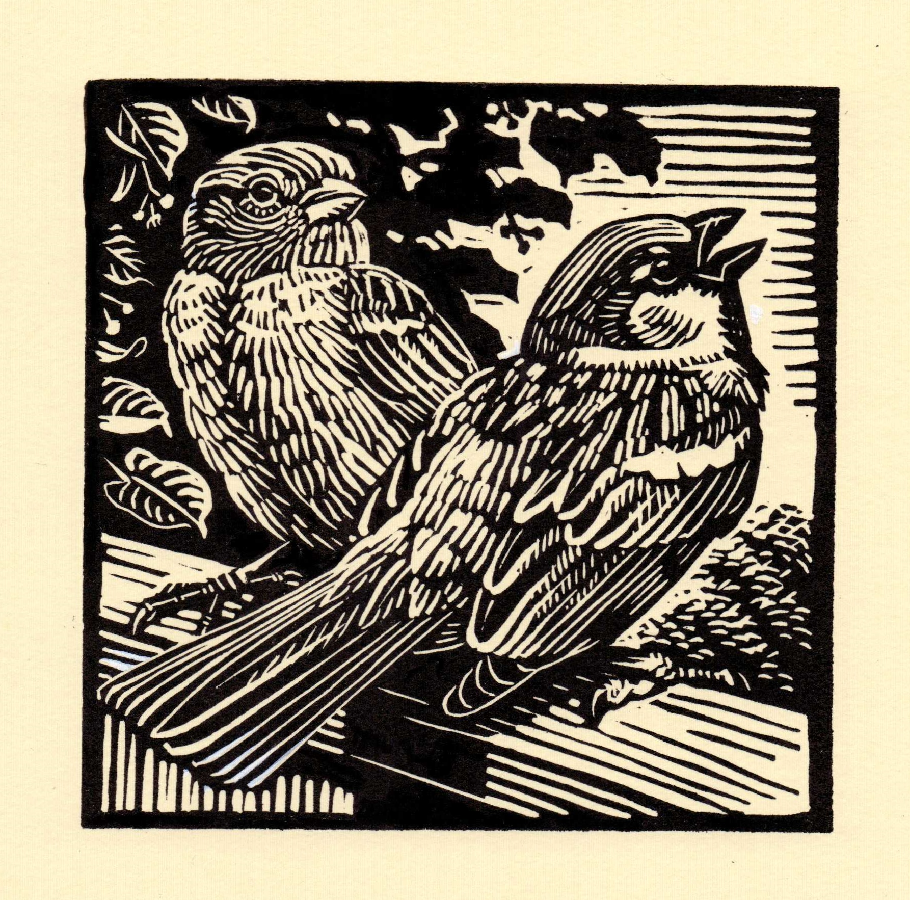 House Sparrow   linocut   £125 framed  £85 unframed