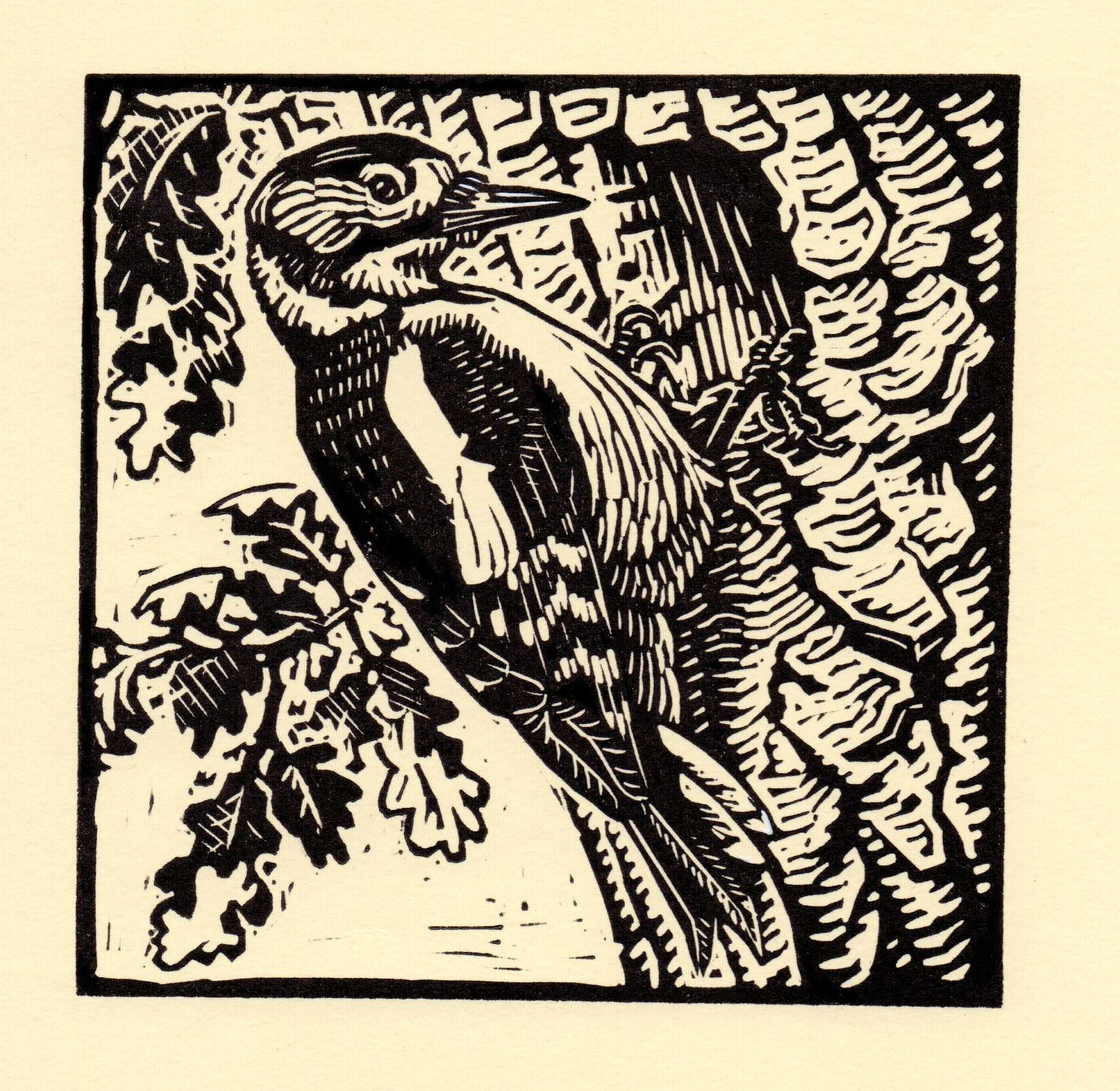 Great Spotted Woodpecker   linocut   £125 framed  £85 unframed