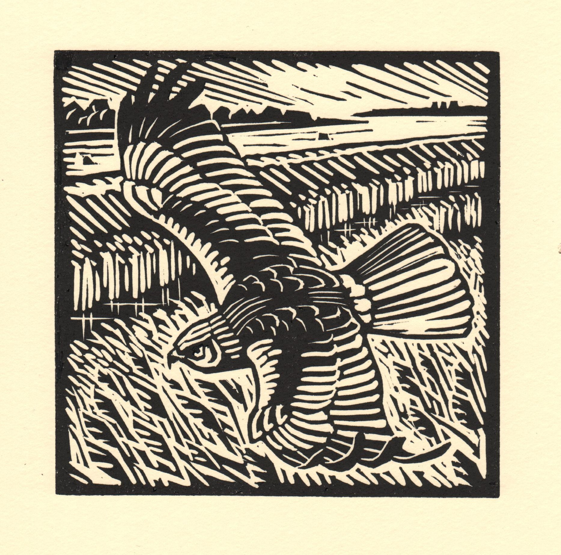 Marsh Harrier   linocut   £125 framed  £85 unframed