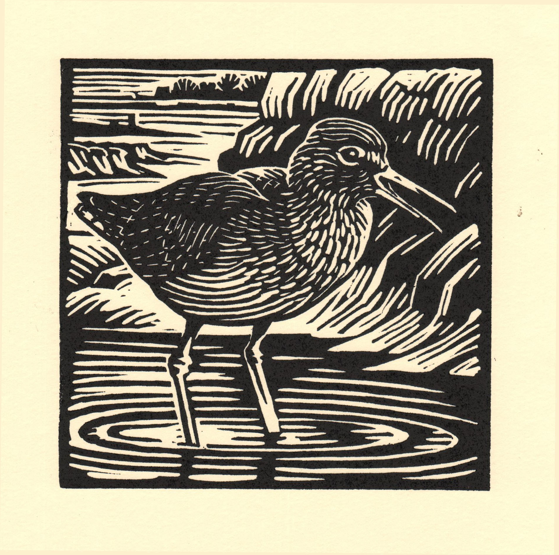 Redshank   linocut   £125 framed  £85 unframed