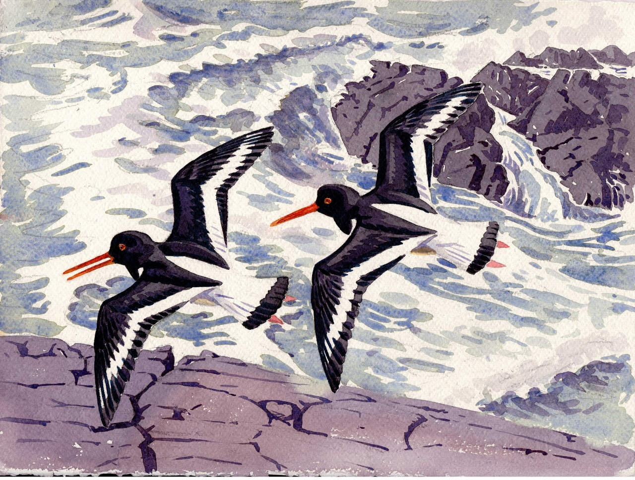 Oystercatchers Over the Surf  Watercolour  £450 framed