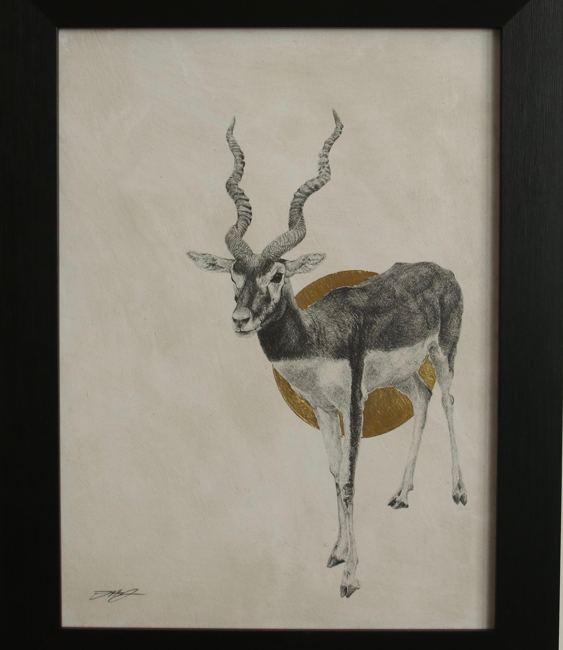 Blackbuck I  Graphite on panel with 24ct gold leaf  41 x 31cm  £750