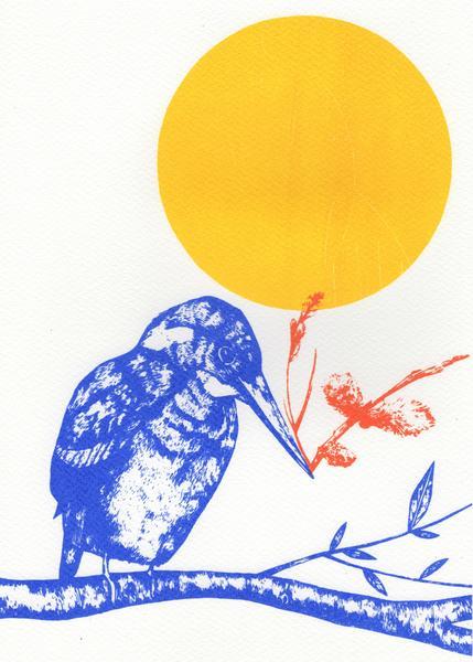 Kingfisher and Sunshine