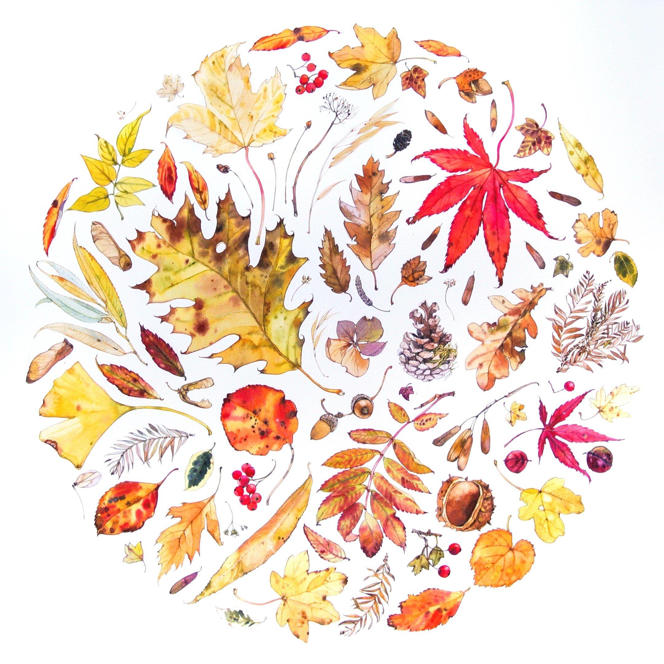 Autumn Circle  watercolour  69 cm x 69 cm framed  £780