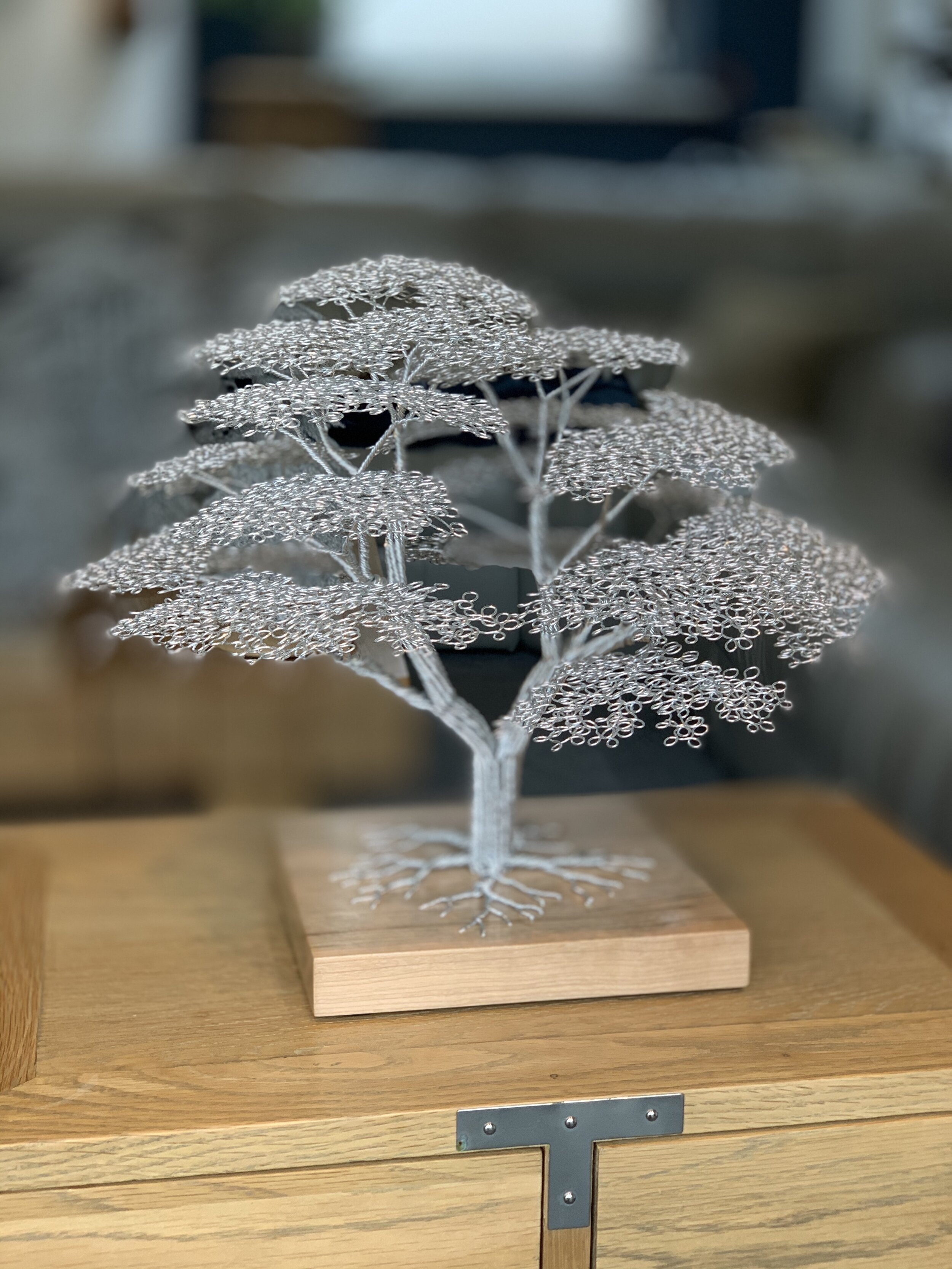 African Acacia, Douglas Fir base  wire and wood  35cm x 40cm  £957