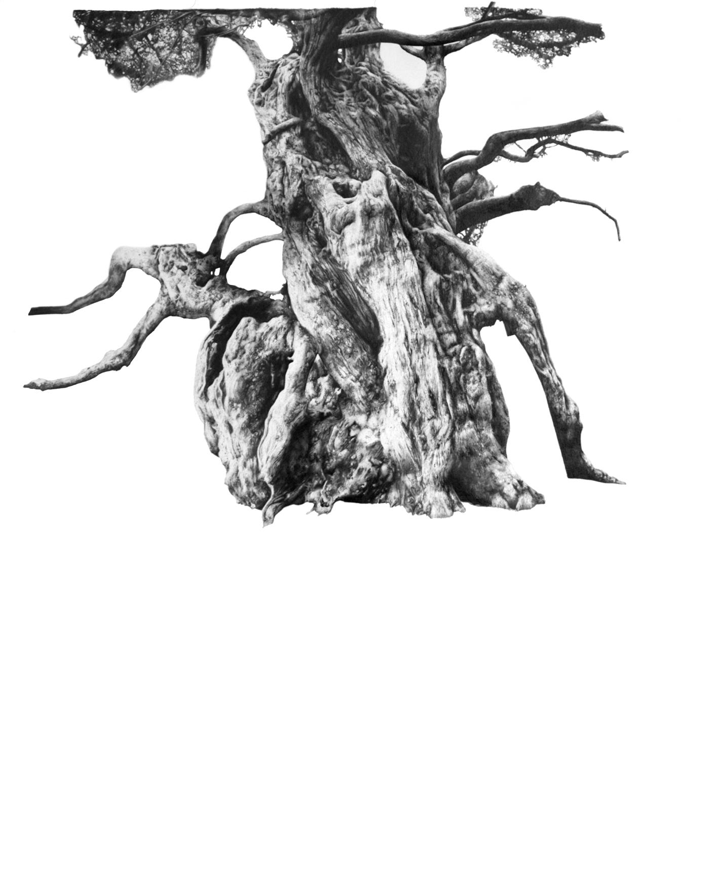 Crowhurst, 2012, 90cm x 70cm.jpg