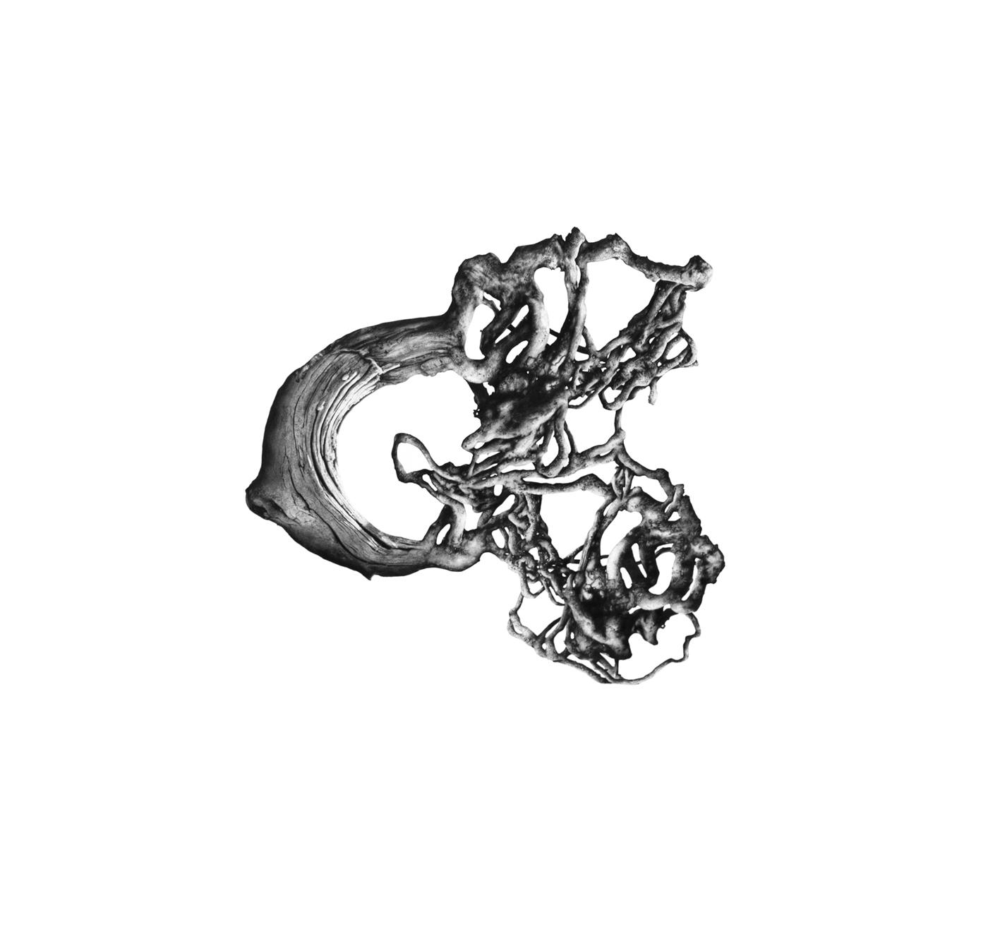 Root Ball II, 2012, 113cm.jpg