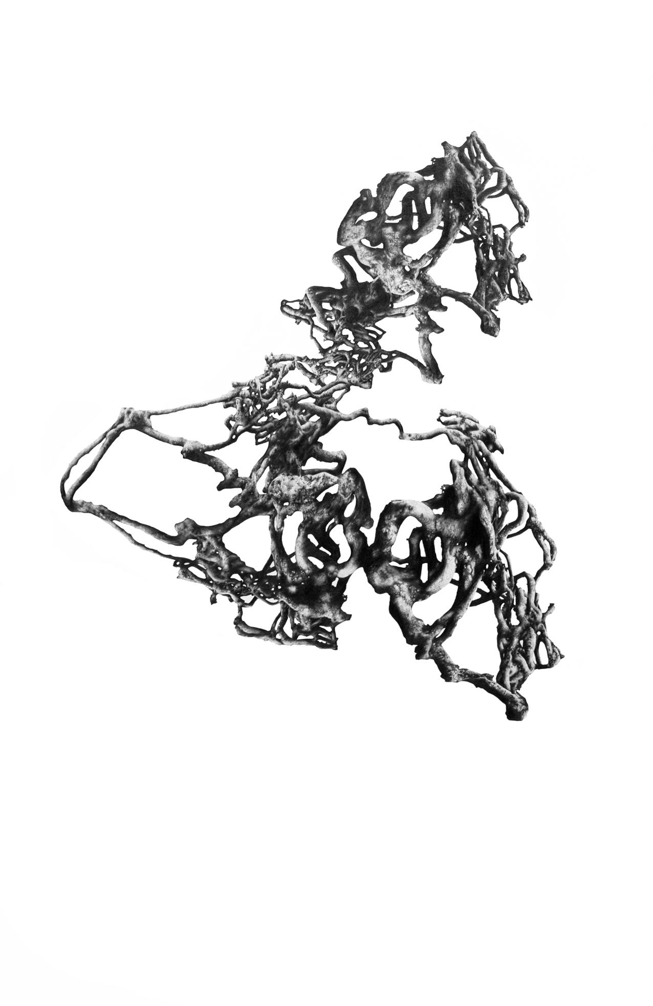 Untitled(Canifern), 2012, 100cm x 70cm.jpg