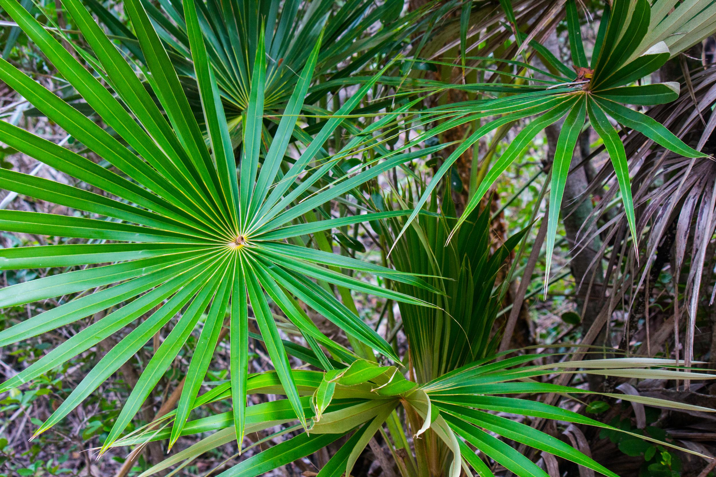 Palms 18 x 12.jpg