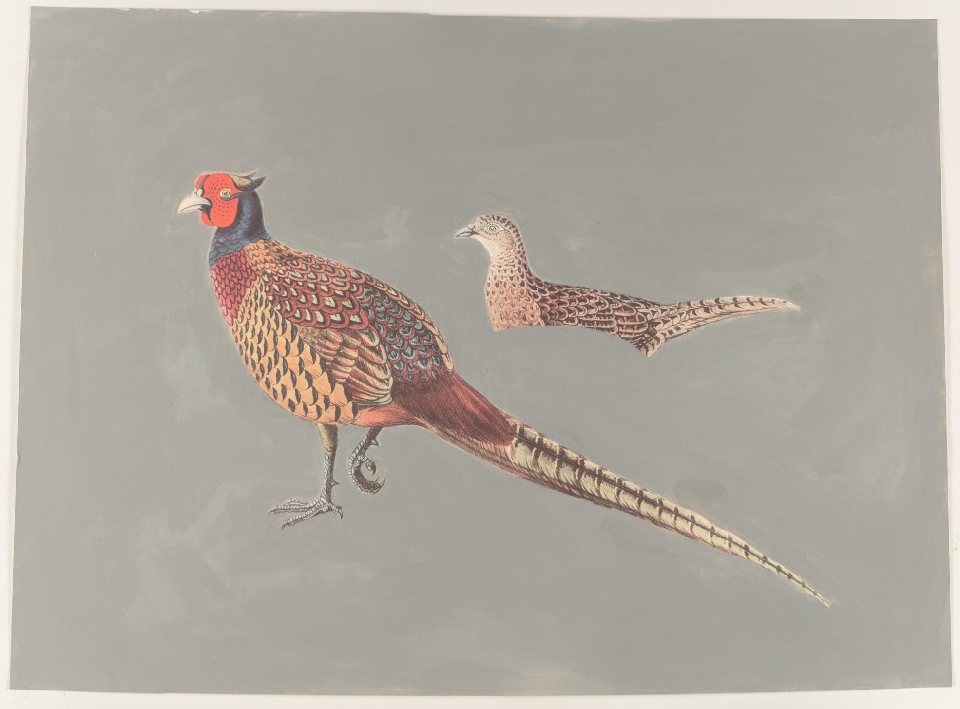 2 pheasants   (11x15 framed - print - acrylic