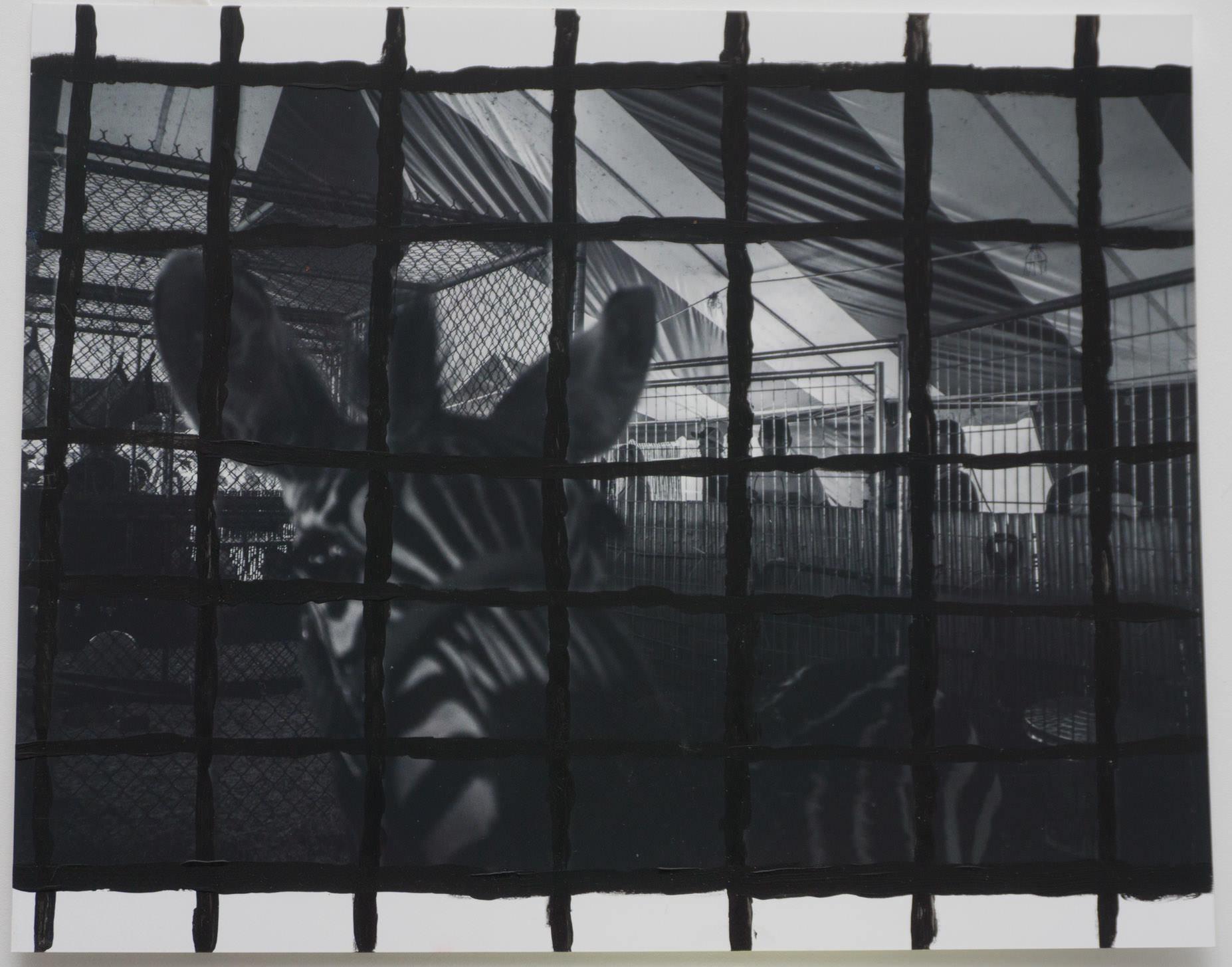 Cage Z  (8x10 - print - acrylic