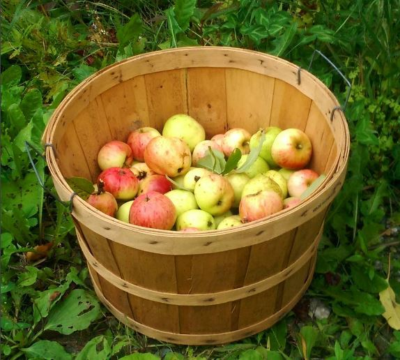 Sweet and tart, the fruit from our old apple orchards has incredible flavor.