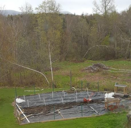 We prepare the soil with compost, then overlay it with ground cover to keep the weeds down without using chemicals. The hoops are covered with fabric to provide shelter to young plants in the early season.