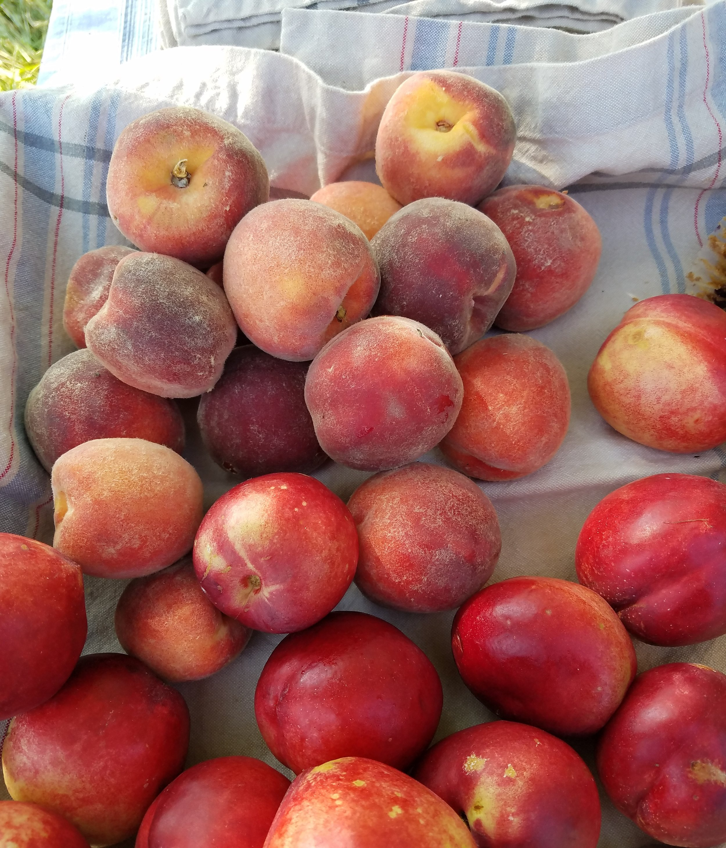 Pick Your Own - We have a growing orchard of fresh fruits so that we can provide our guests with local flavors. Enjoy picking a treat on our property or explore some pick-your-own farms nearby.