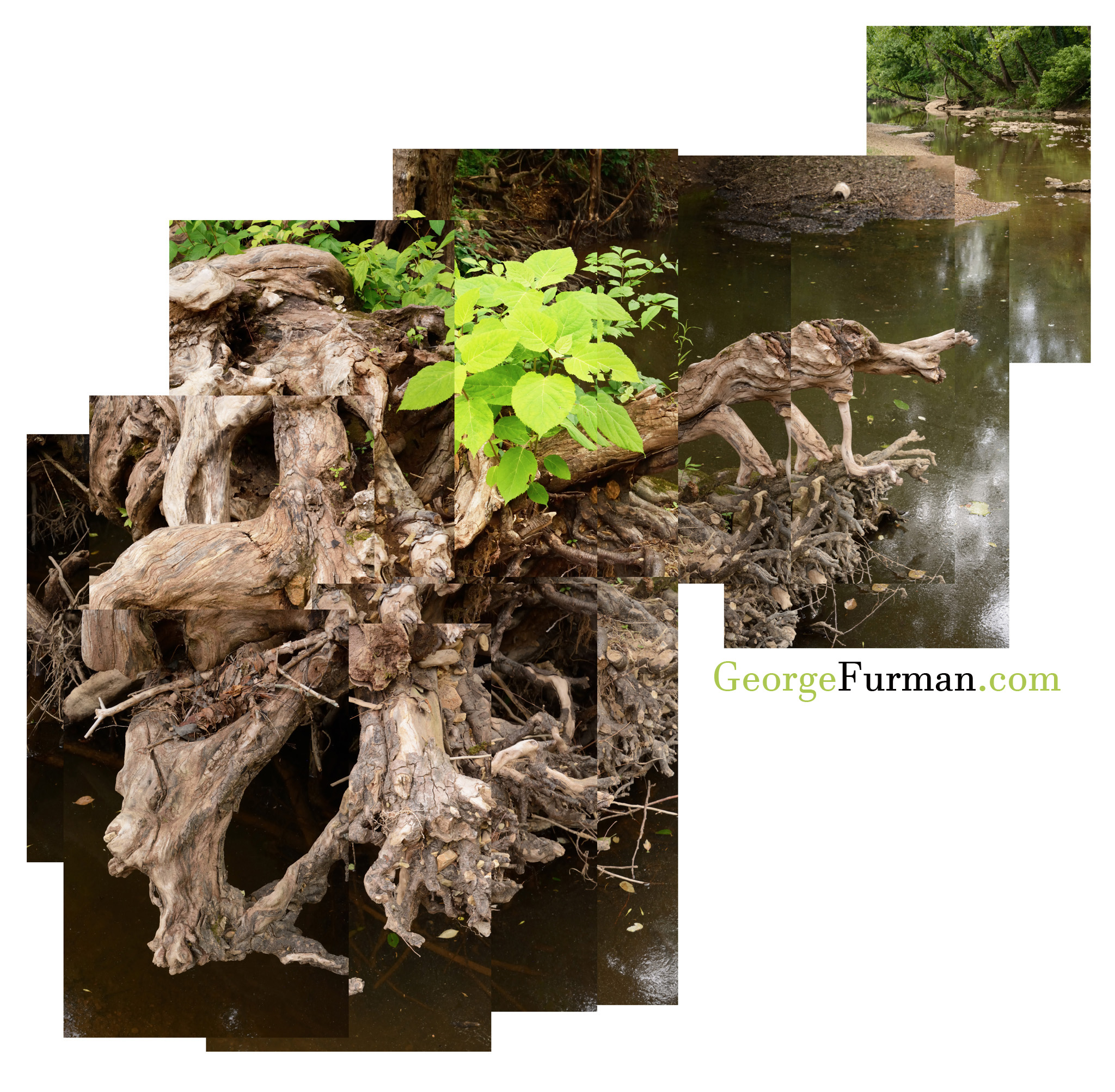 Root to River 2048 - Copy.jpg