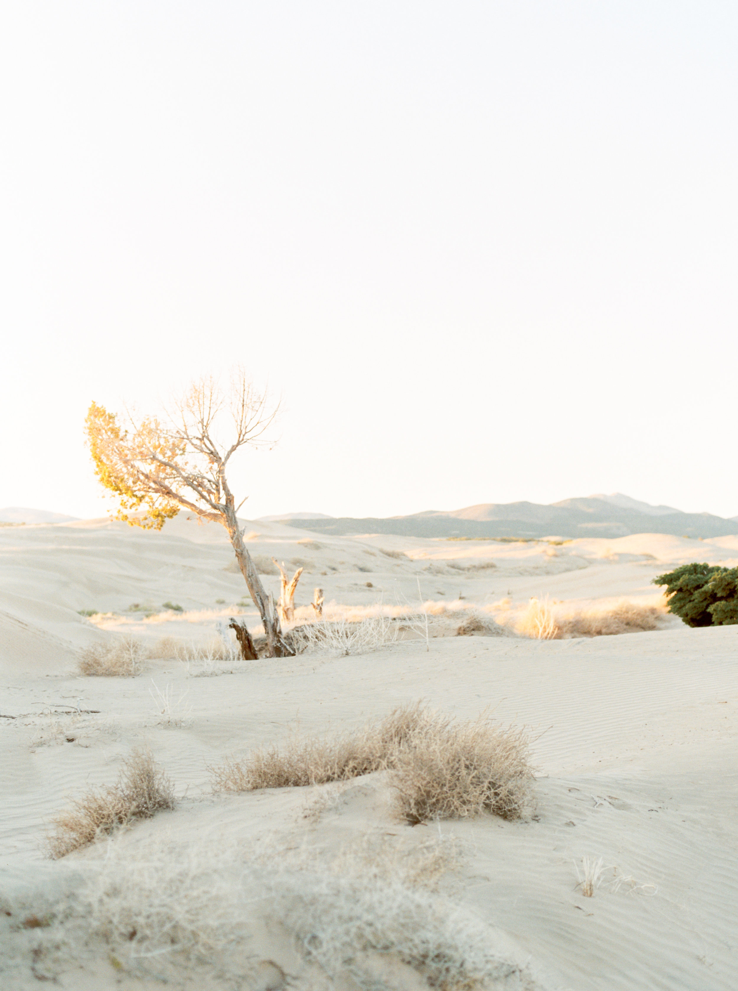 Callie Manion Photography_Desert Sand Dunes Editorial_119.jpg