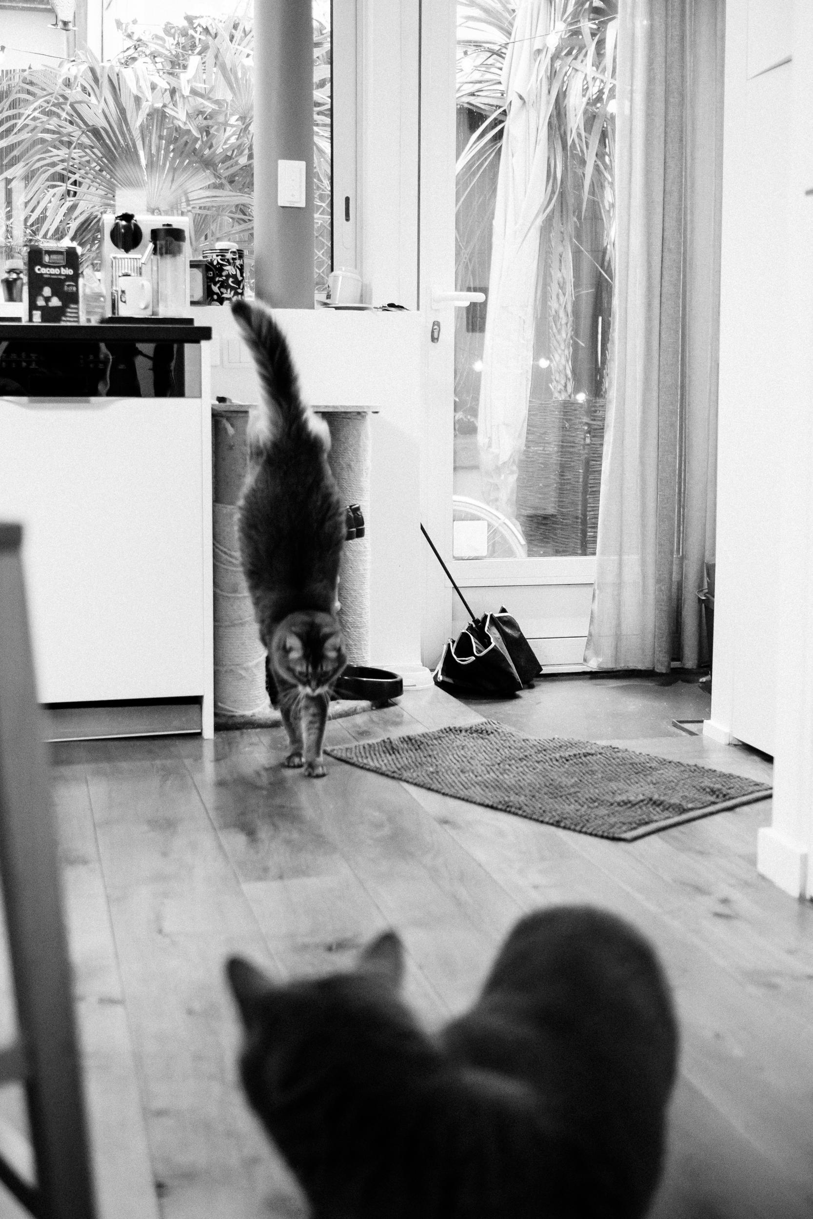 Alina Sepp Photography | Herve
