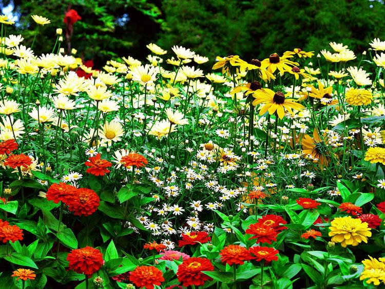 5-flower_garden_wallpaper_hd-normal.jpg