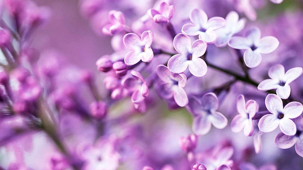 purple-flowers-tumblr-background-1.jpeg