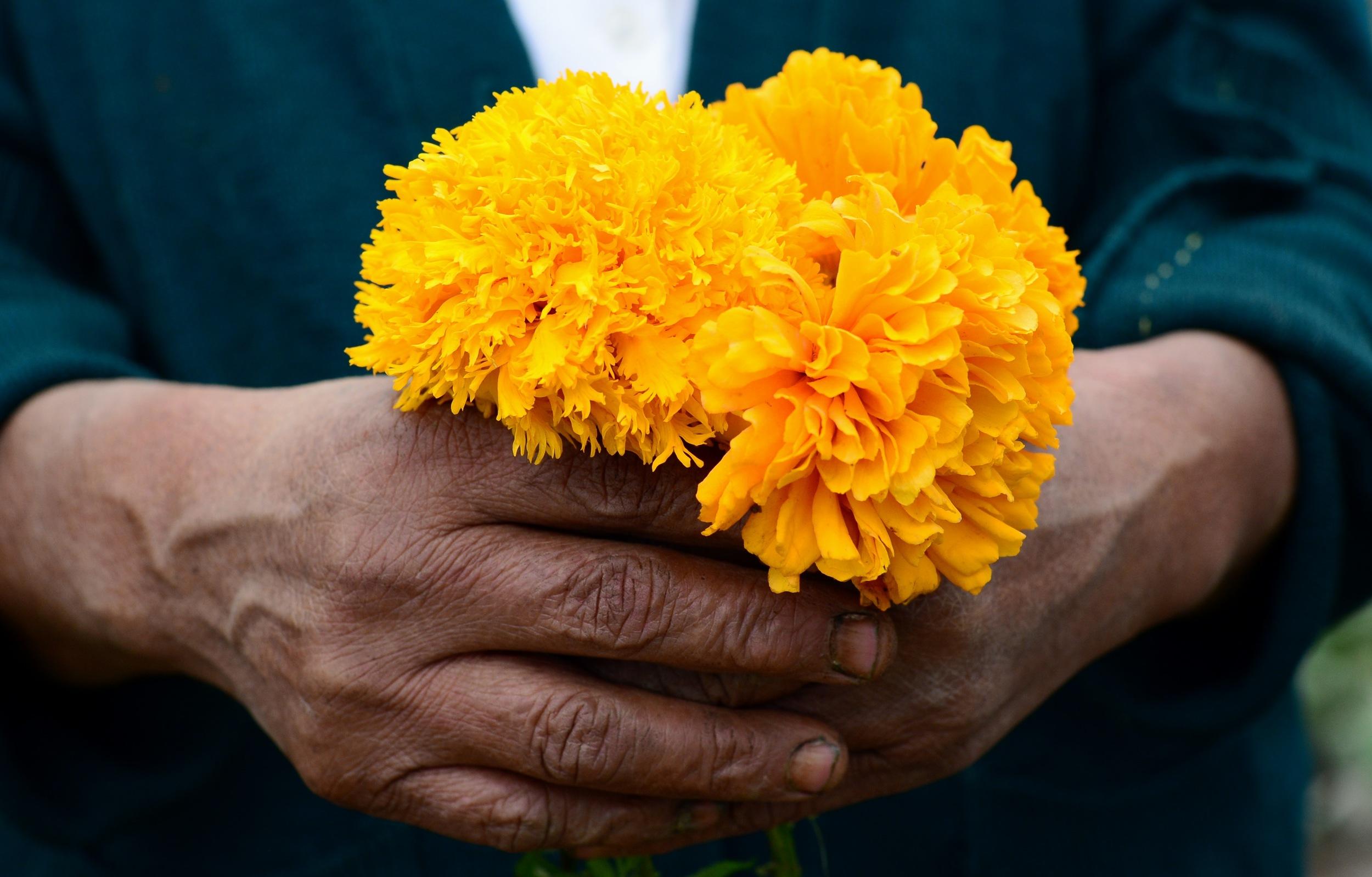 Source: Wikipedia,  cempauchil  (marigold) the traditioanl flower used to honor the dead