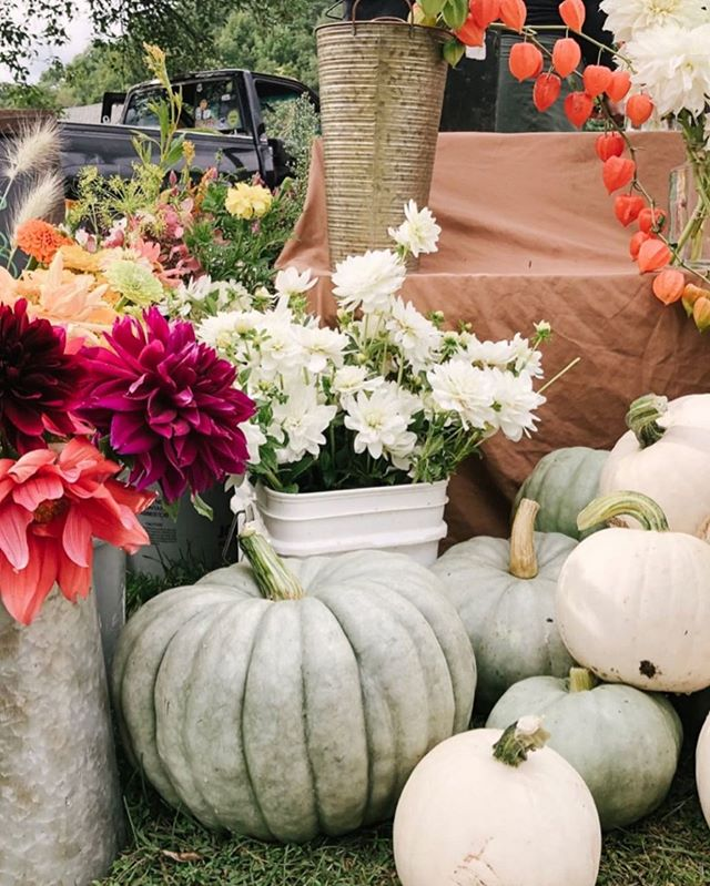 Fall is in the air at the Ludlow Farmers Market! We hope to see you there this Friday from 4 to 7 p.m. 🍂💫 . 📸: @teaselwooddesign . . #farmersmarket #ludlowvt #vermont #vt #okemo #itsokemotime #fall #pumpkins #ludlow #ilovermont