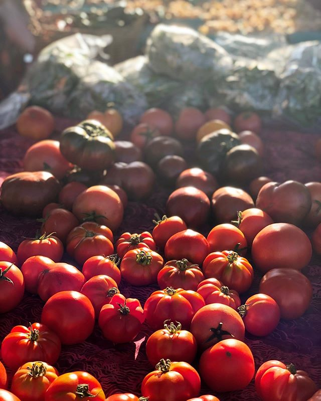 Find the perfect organic tomato at the Ludlow Farmers Market tomorrow evening from 4 to 7 p.m. 🍅 #SupportYourLocalFarmers . . . #ludlow #ludlowvt #ludlowvermont #okemo #itsokemotime #okemovt #certifiedorganic #shoplocal #organic #vermont #ilovermont #farmersmarket #market #farmers #tomato #freshveggies #farmersmarketfinds