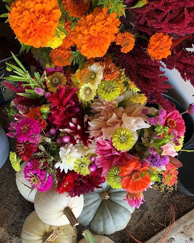 It's a gorgeous Fall Friday! Pick up some gorgeous flowers, pumpkins, pasta, cheese and more at the Ludlow Farmers Market this evening between 4 and 7 p.m. #ShopLocal 🎃 🌸 Flowers from @jo.co.growers