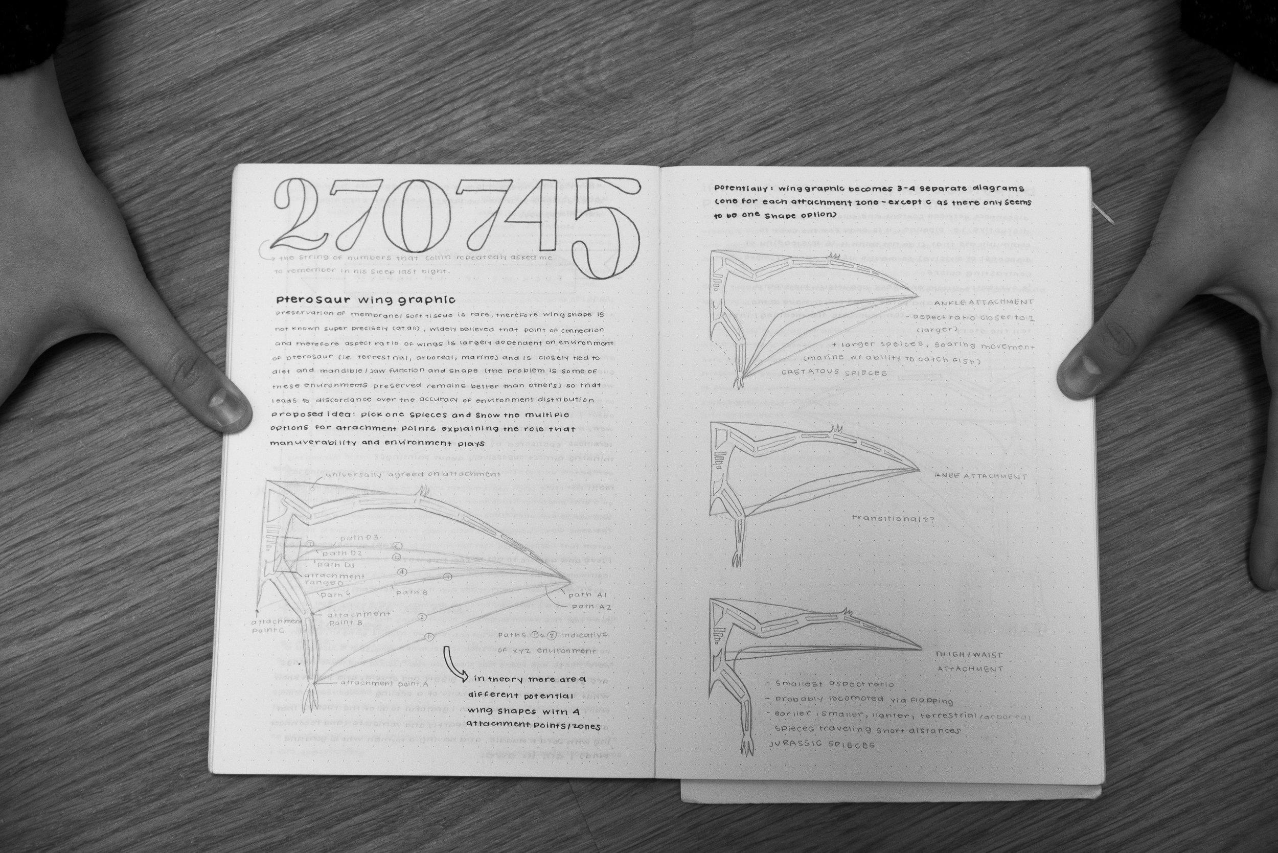 Pterosaur wing shapes