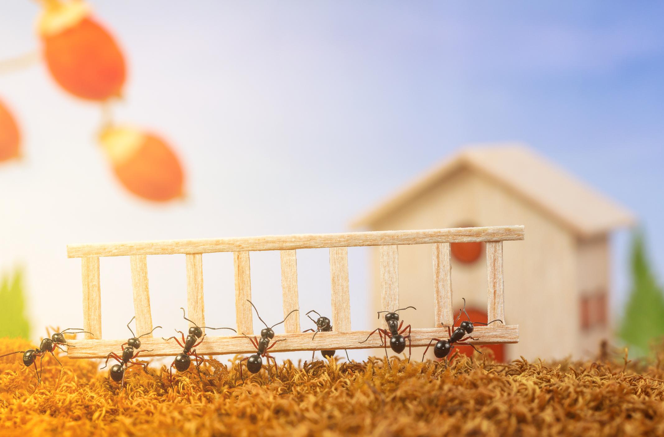 Ants As Problem Solvers - Kindergarten