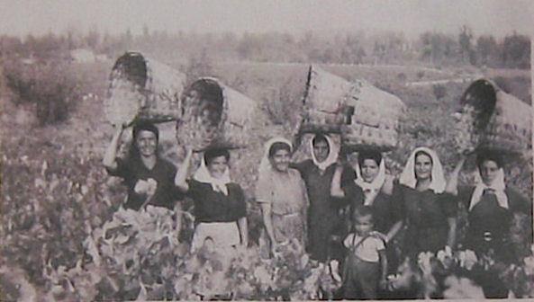 Harvest in Rioja in the 1920's