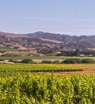 Acin Vineyard