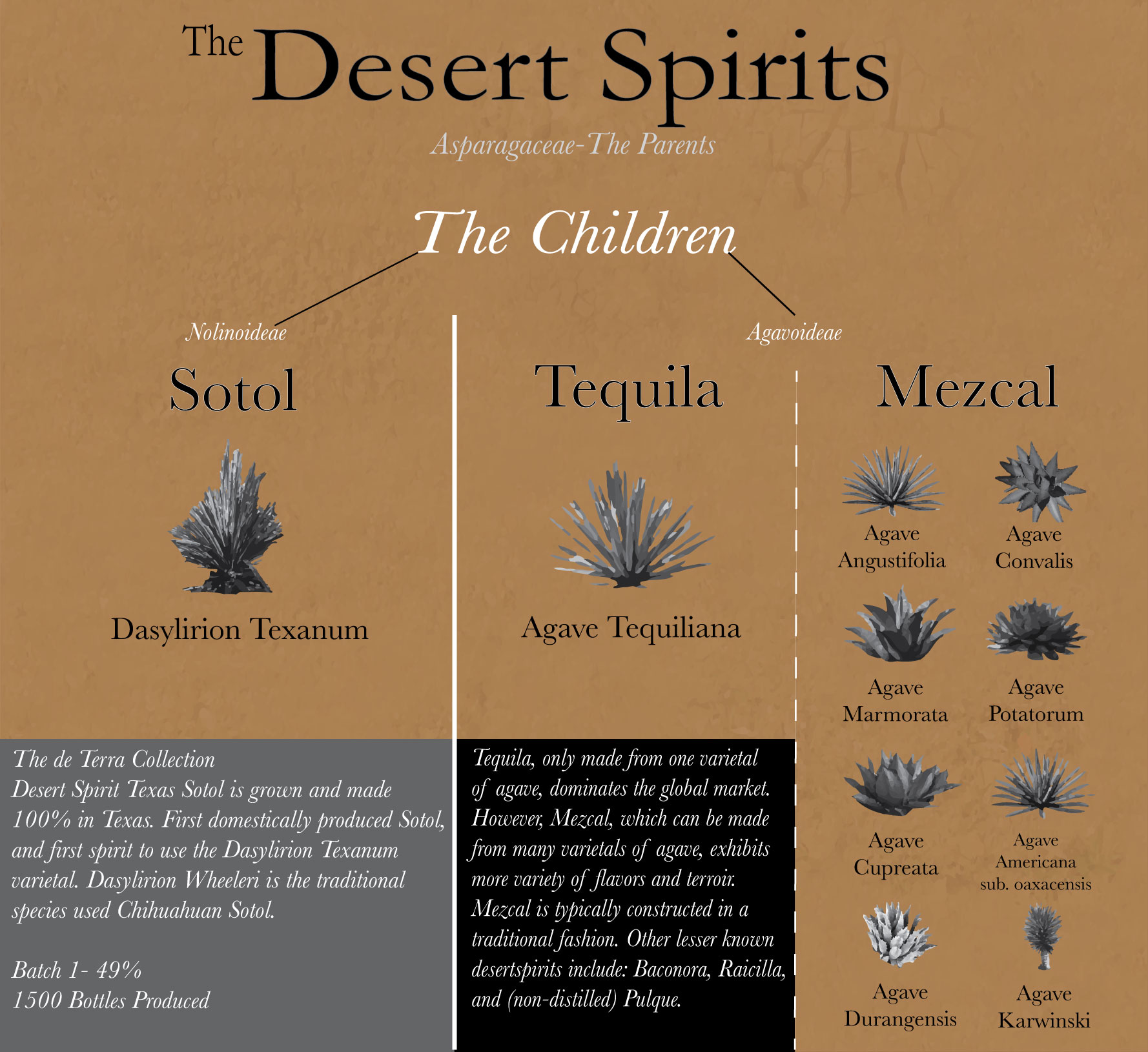 Genius Liquids' graphic explaining Sotol's relationship with agave spirits.