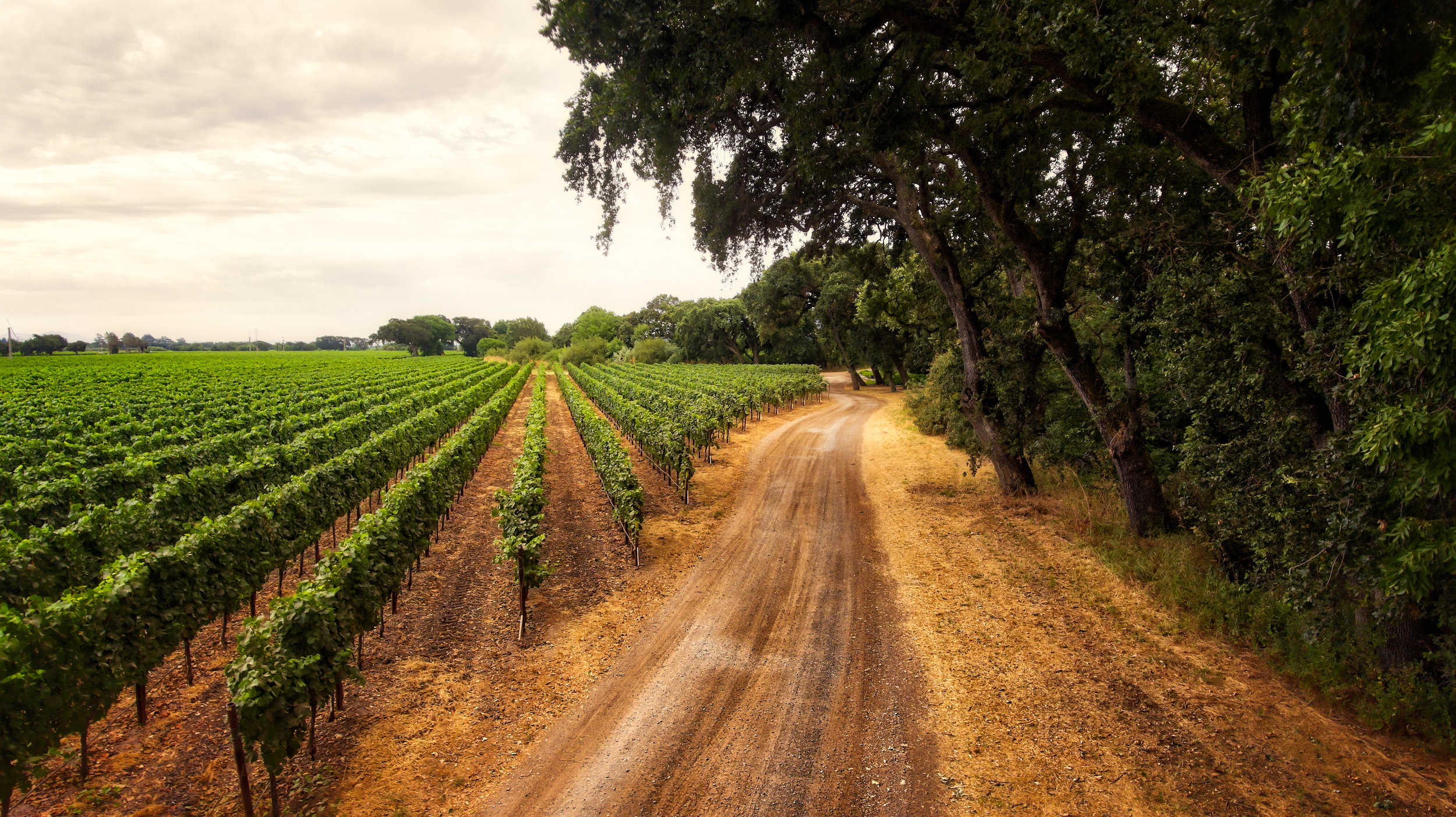 Our Esteemed Winery Clients    Learn More