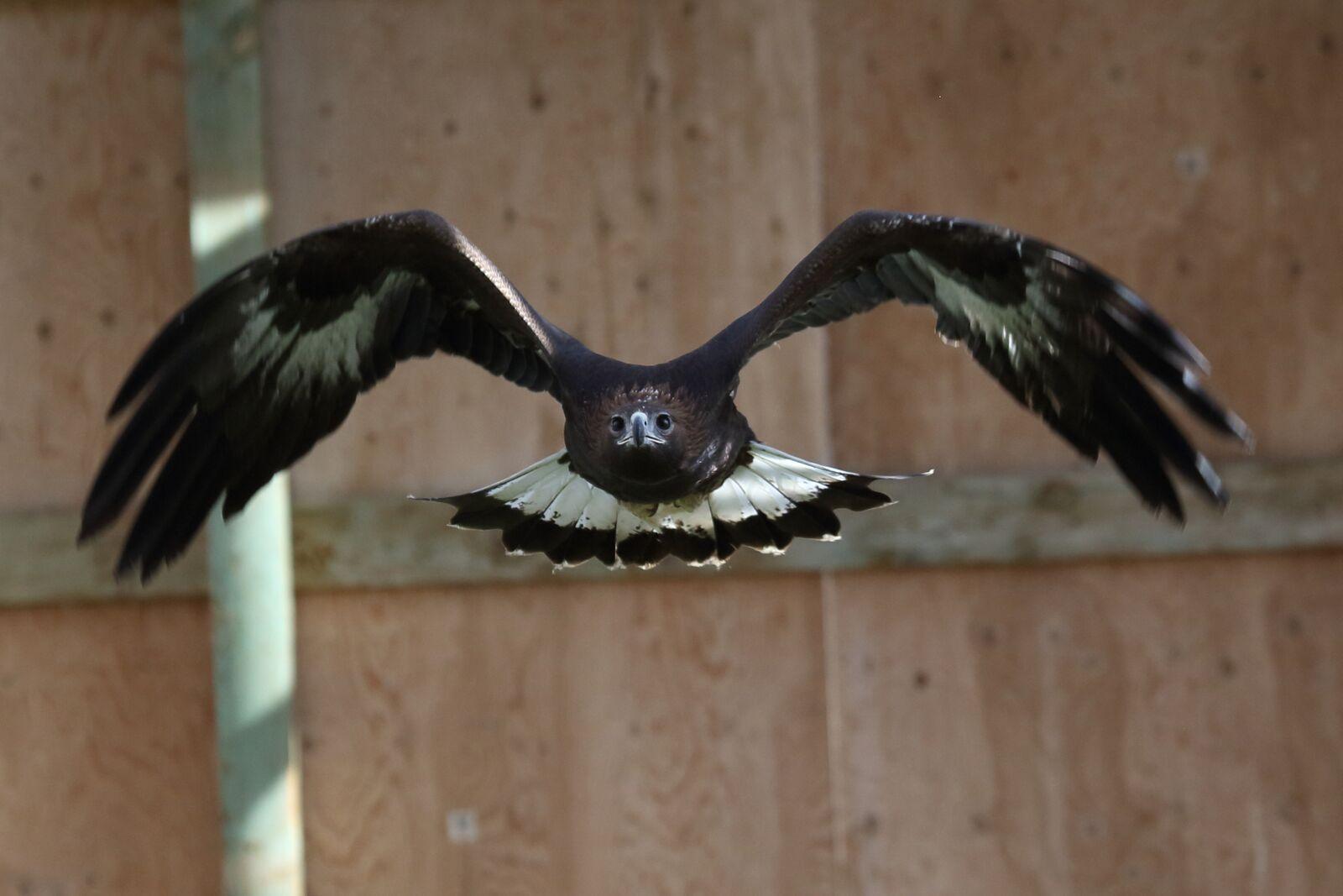 Birds of Prey Foundation | Broomfield, Colorado
