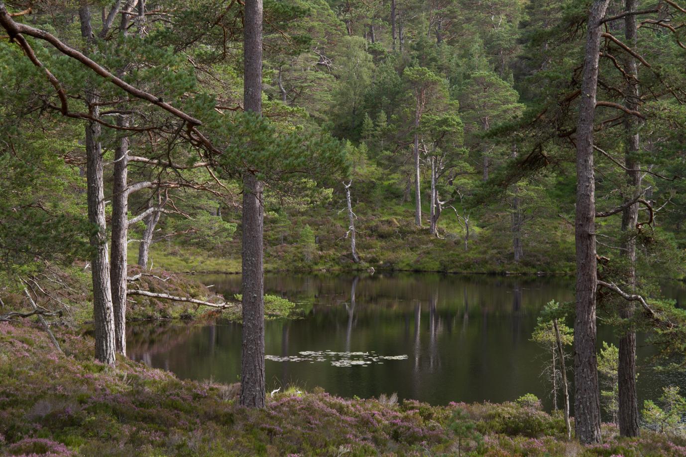 Lochan a Chlaidheim, Glen Affric by Kyle Noble