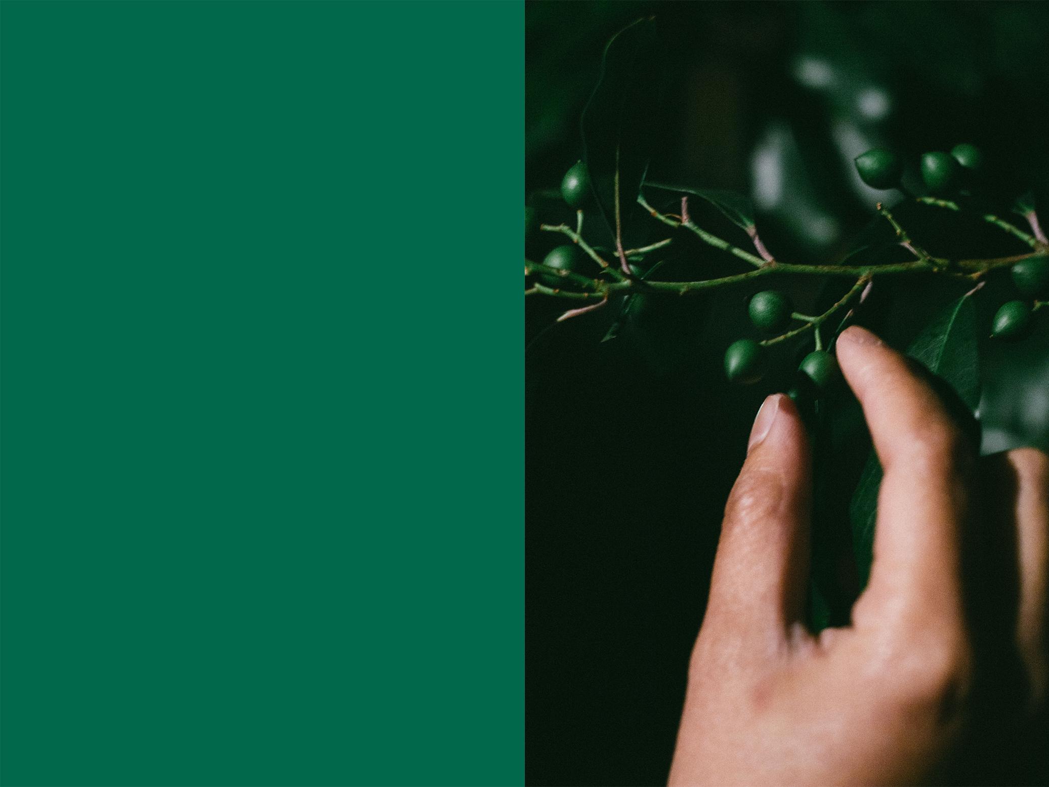 greenberryleft.jpg