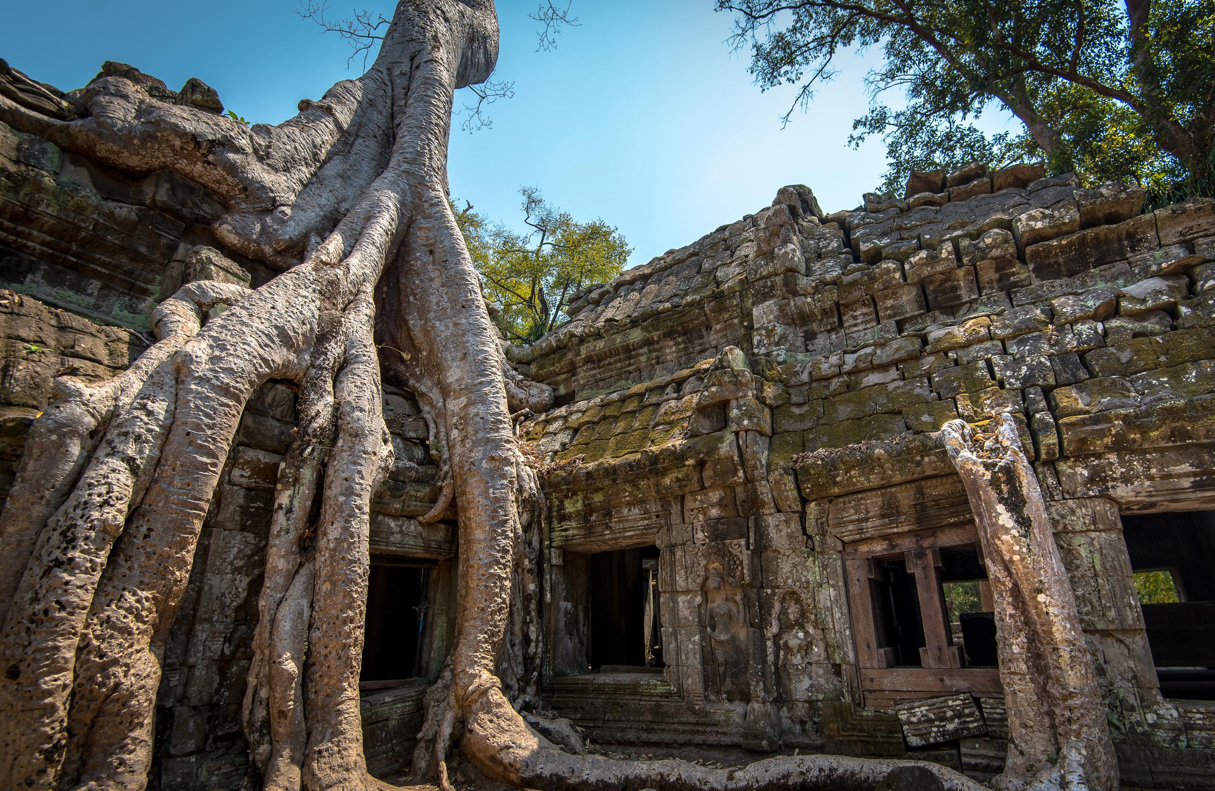 Ta Prohm Angkor Wat.jpg