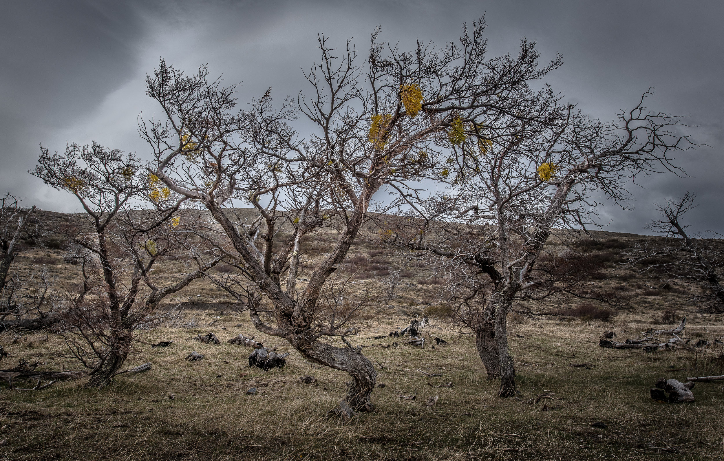 Spooky Trees-2.jpg
