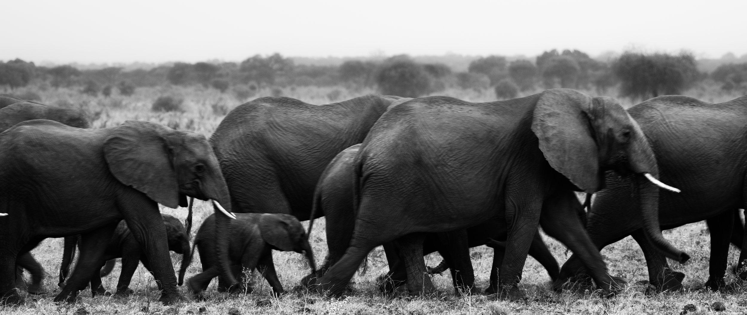 Elephant Line.jpg