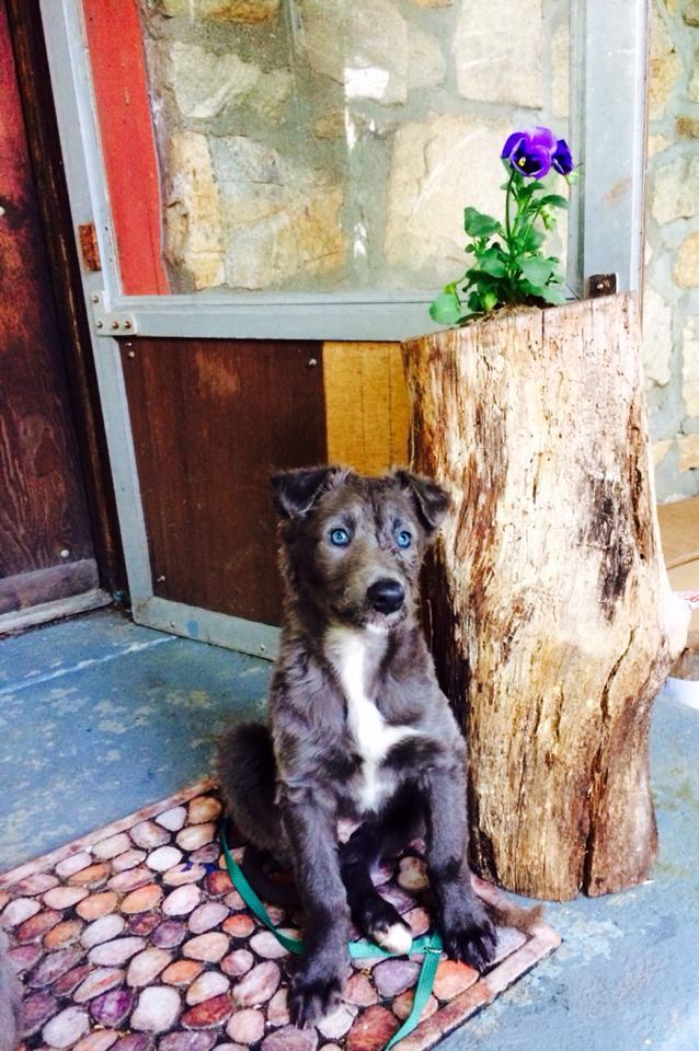 Puppy Training Denver